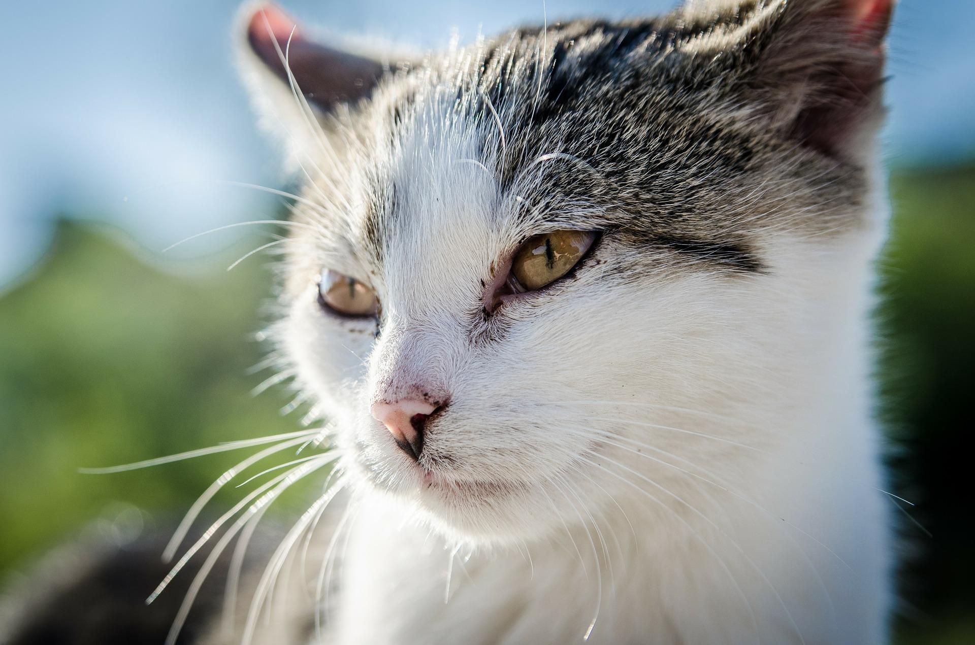 cat-256188_1920